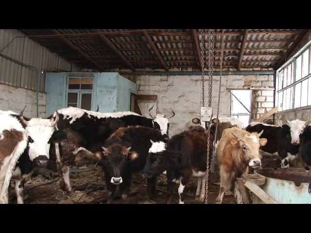 Договор купли продажи крупного рогатого скота образец скачать бесплатно