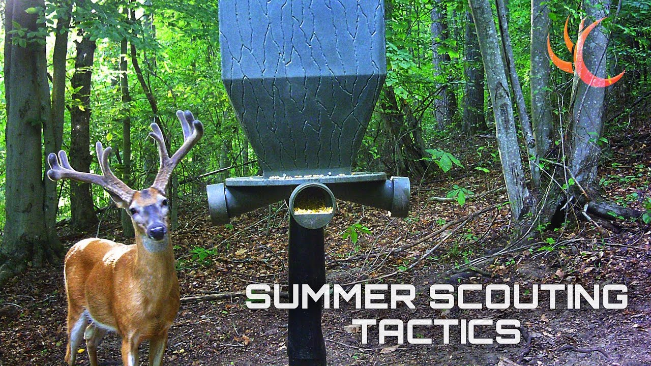 SUMMER SCOUTING TACTICS - FINDING THAT NEXT TARGET BUCK - WHAT TO USE TO FIND DEER ON YOUR FARM
