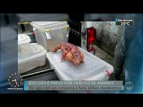 Biólogo é preso em São Paulo acusado de tráfico de animais | SBT Brasil (07/03/18)