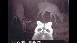Скрытая камера, показывающих чем занимаются животные
