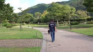 ラブラドール陸「キャンプ場四国三郎の郷をお散歩~♪」