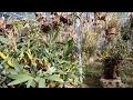 Vườn Lan Rừng Lớn Nhất Việt Nam|Orchid Garden Biggest of Viet Nam|1080HD