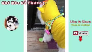 Cute Funny Dog Costumes   Cute Dog Funny Videos