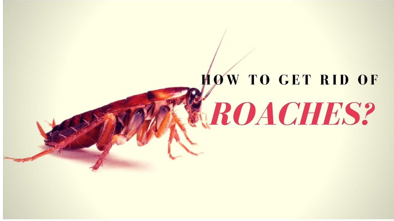 How to Kill Roaches Fast? ⛔ How to Get Rid of Roaches Naturally ...