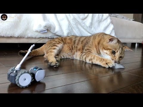Our 3 Indoor Cats Playing With Mousr Cat Toy