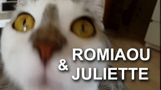 ROMIAOU & JULIETTE - PAROLE DE CHAT