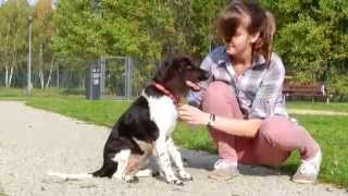 Zayra, 4 months small munsterlander A Dog Park in Polkowice This is...