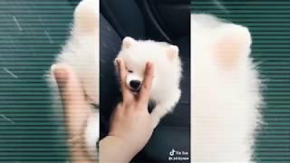 Adorable Pets Tik Tok