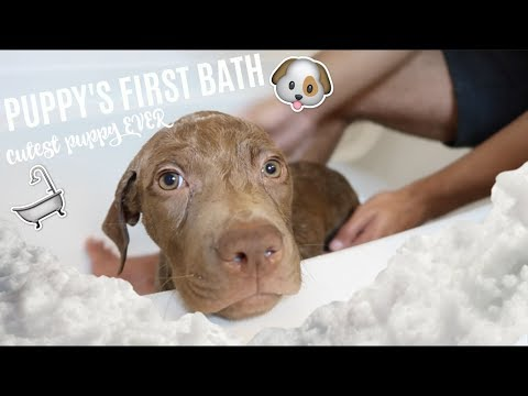 PUPPY'S FIRST BATH (CUTEST REACTION EVER)