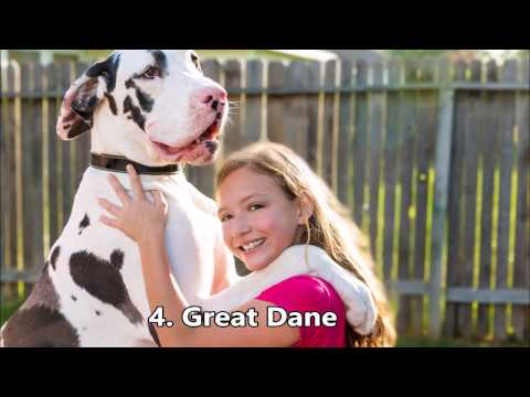 10 BIGGEST GIANT Dog Breeds in the World