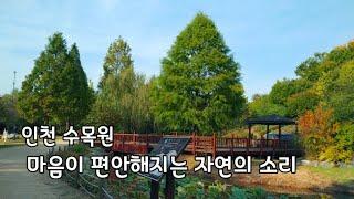 인천수목원|자연의소리| 새소리,물소리,휴식 명상|자연의…
