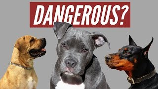 "Do You own a ""Dangerous"" dog breed?"