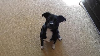 Little Moki shows us her dog tricks