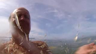 Ржачное видео. Прикол на море. Нападение креветок.
