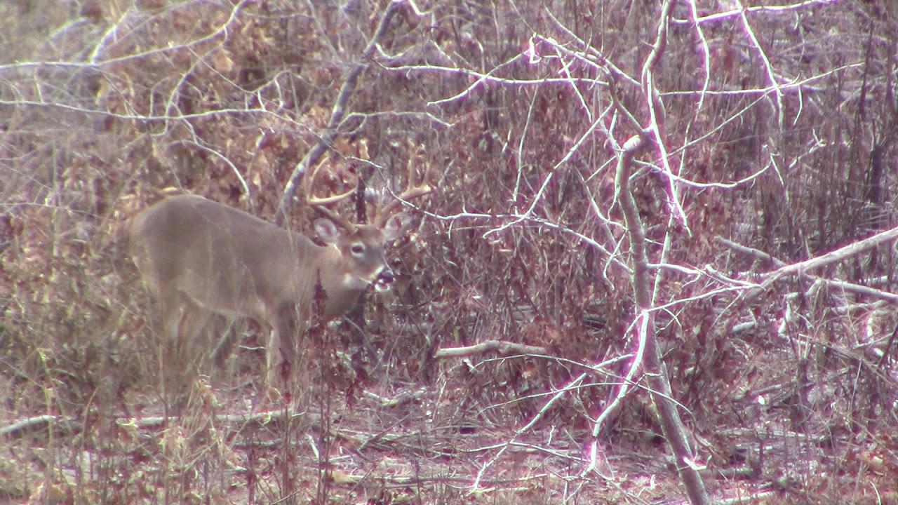 Lamar County, Alabama 8pt kill - YouTube