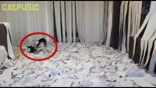 Хозяева котейки  решили сделать ему приятное, украсив комнату 100 рулонами туалетной бумаги
