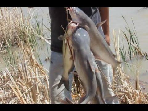 Channel Cats On The Yo Yo Fishing Reel
