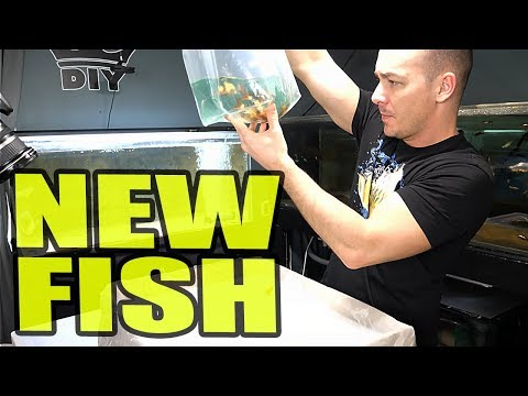 RIDICULOUS NEW FISH ORDER