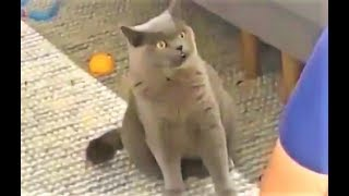 Видео с Ревнивым Котом стало вирусным