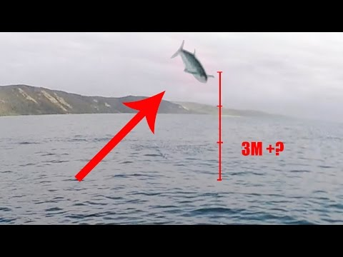 Insane Surface Strikes- Spanish Mackerel From a Kayak