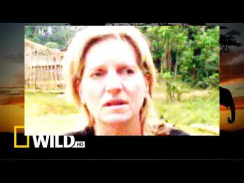 Download tribal Wives the Babongo Gabon Series Two Episode Two Part 01