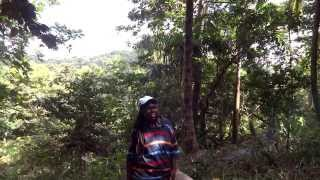 Clearing Land In Portland, Jamaica For Living Akashi Farms & Retreats
