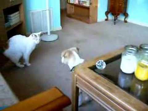 Alpha Cat Meets New Puppy