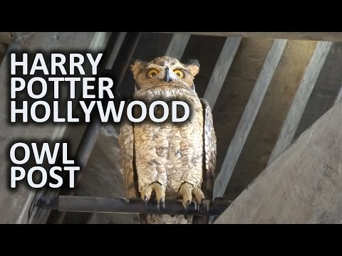 Why Just Send An Owl With The Acceptance Letter When You Can Send