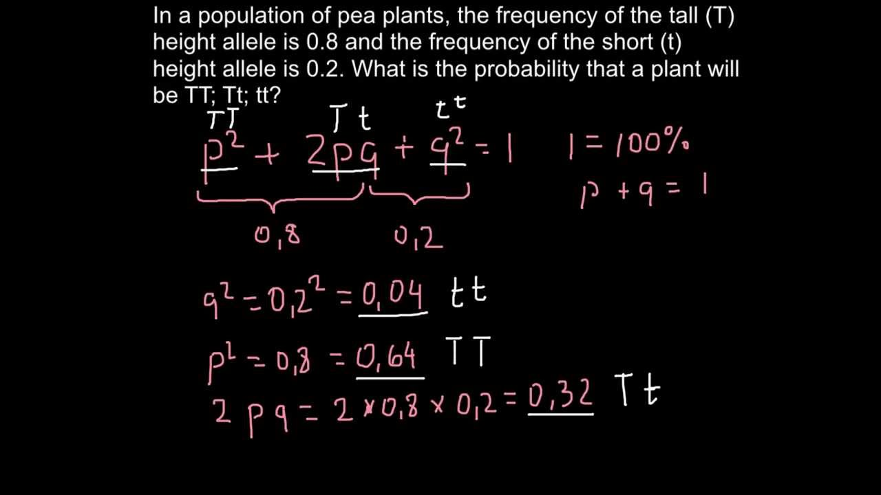How To Use Hardy Weinberg Formula In Order To Solve