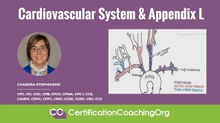 Cardiovascular System and Appendix L