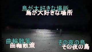 その夜の鳥 162夜 心霊スポット 続・城山稲荷 thumbnail