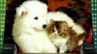 Фото про собачек