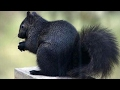 Mutasyona Uğramış Hayvanlar mp3