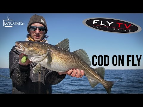 FLY TV - Cod on Fly