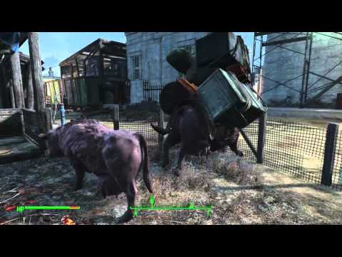 how to get a brahmin in fallout 4
