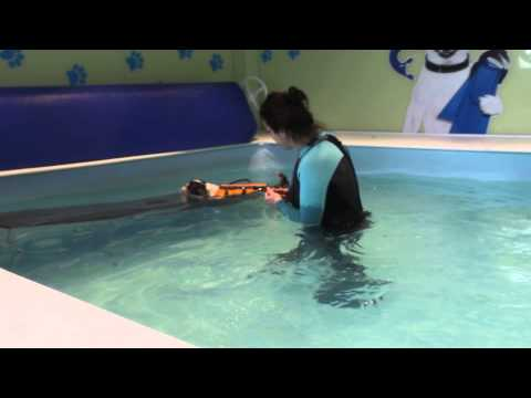 Toby Lhasa Apso goes SWIMMING at Paddling Paws dog hyrdotherapy session 1