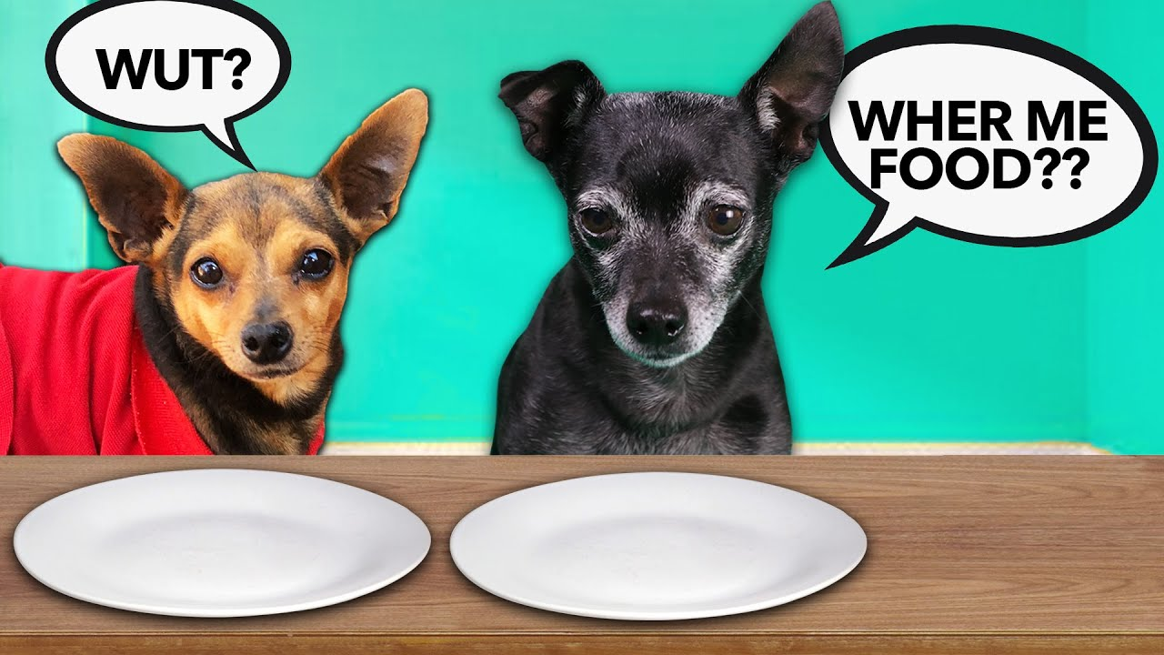 Giving Our Dogs Invisible Food to See Their Reaction! PawZam Dog