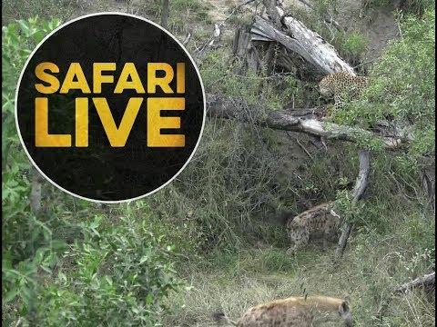 safariLIVE - Sunrise Safari - May 30, 2018
