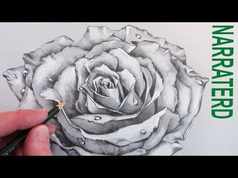 How to draw a rose narrated pencil drawing youtube