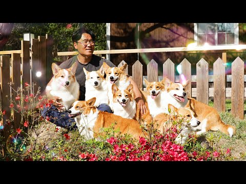 both-are-round,-but-the-corgi-is-heavy-and-the-bubbles-are-light.-😜