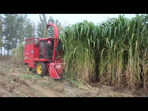 Napier grass king grass cutter silage harvester for animal feed working video