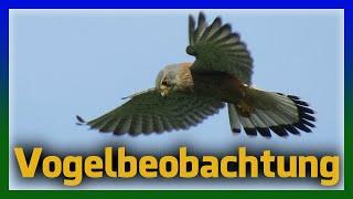 Birding Und Fotografieren - Vögel In Deutschland
