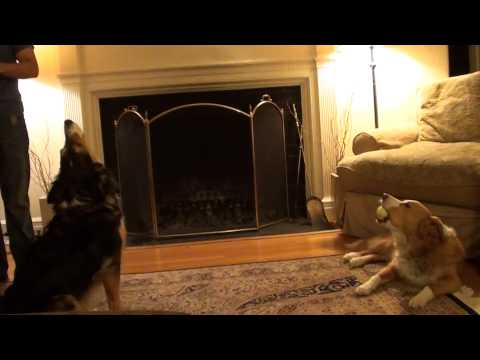 """Dogs Sing """"Mission Impossible"""" Theme Song"""