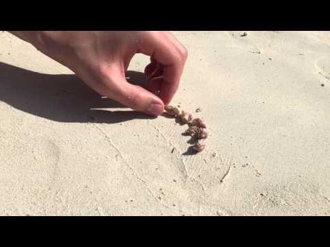 People on the beach help homeless hermit crab find a new shell