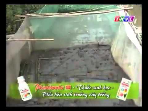 Kỹ thuật nuôi Ếch Thái     Kythuatnuoitrong.com