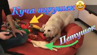Какие игрушки НЕ надо покупать собаке  Игрушки для лабрадора Бэтти
