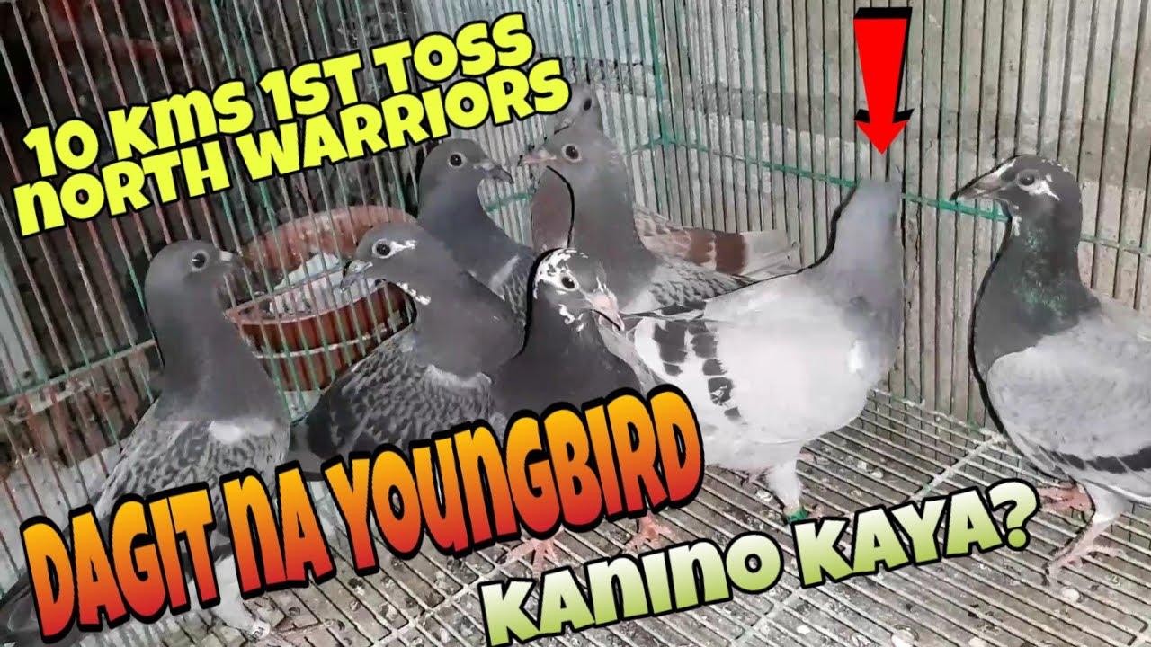 Dagit na double banded kanino kaya? Nagtoss na tayo ng kalapati pang north at kumpleto kaya?