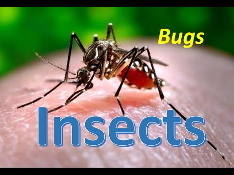 Bugs and Insects for Kindergarten,Preschool and Junior kids