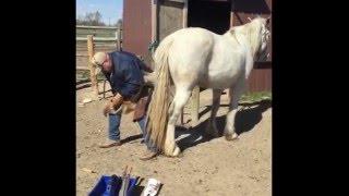 Как подковать нервную лошадь