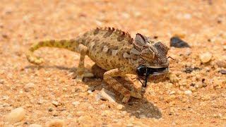 Chemeleone Photo Gallery 🐲 ll Lizard Gallery 🐲🐊   What is Chemeleone And 🦎 I